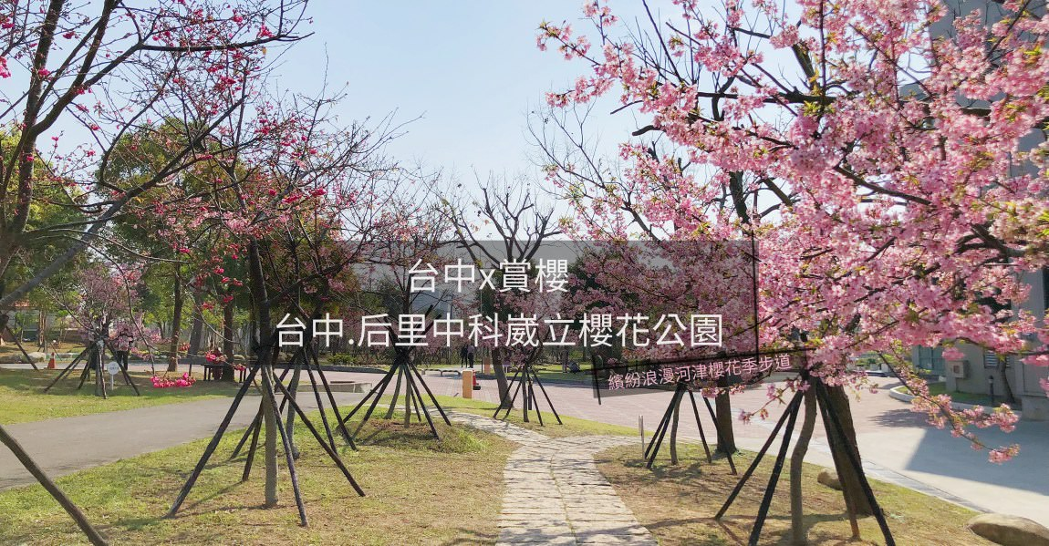 台中x賞櫻│台中后里中科崴立櫻花公園。繽紛浪漫河津櫻花季步道